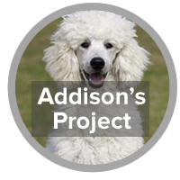 Addison's Project - photo of poodle