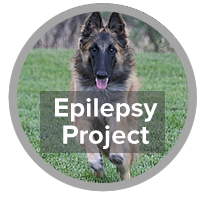 Epilepsy Project - photo of Belgian Tervuren