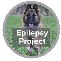 Epilepsy Project - photo of Belgian Tervuren