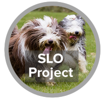 SLO Project - photo of Bearded Collies
